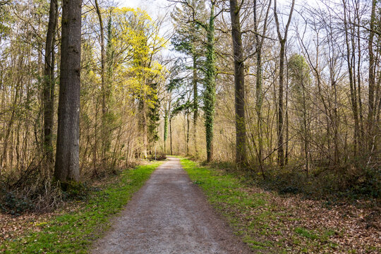Balade en forêt en début de printemps - forêt de Stambruges - Belgique