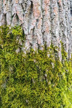 Tronc d'arbre recouvert par de la mousse verte - texture