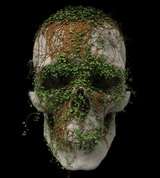 Skull made of stone with vines growing and covering it
