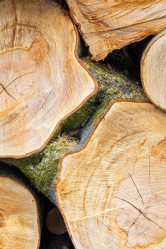 Buches de bois coupé photographiée en gros plan - texture de bois