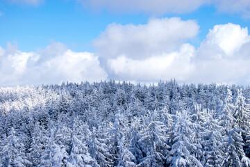Las widziany z góry w słoneczny dzień zimą