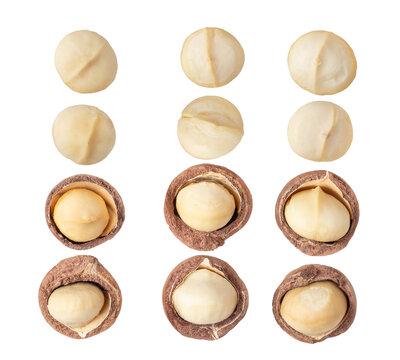 Peeled Macadamia nut isolated on a white background