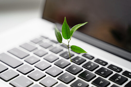 Laptop keyboard with plant growing on it. Green IT computing concept. Carbon efficient technology. Digital sustainability