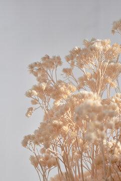 Beige dried flowers