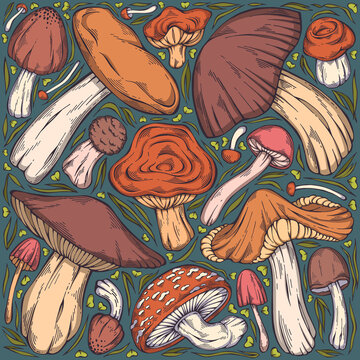 Hand-drawn colorful forest wild collection of assorted edible mushrooms, leaves and berries. Can be used for menu design, label, icon, recipe, packaging, web. Botanical vector set