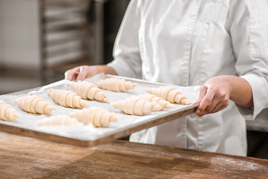 Hands with tray of raw croissants prepared for baking