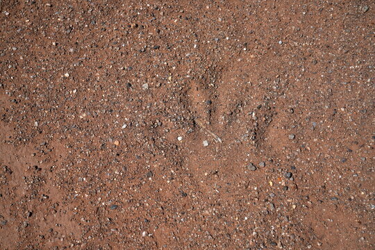A handprint is left in the sand by asylum-seeking migrants crossing the border from Mexico in Calexico