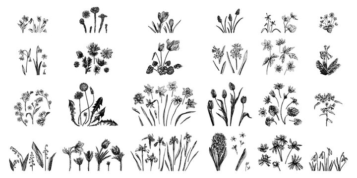 Set of vector illustrations of spring flowers drawn with a black line on a white background.