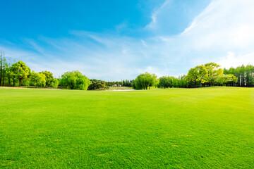 Printed kitchen splashbacks Grass Green grass and forest in spring season.