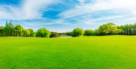 Green grass and forest in spring season.