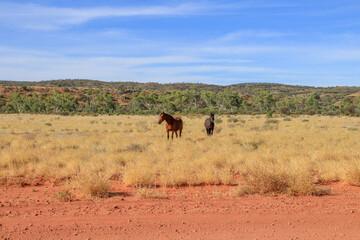 horse in the desert Wall mural