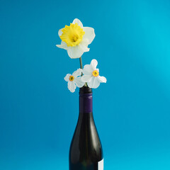 Yellow narcis and white spring flowers in a botlleof wine on a blue background,minimal composition
