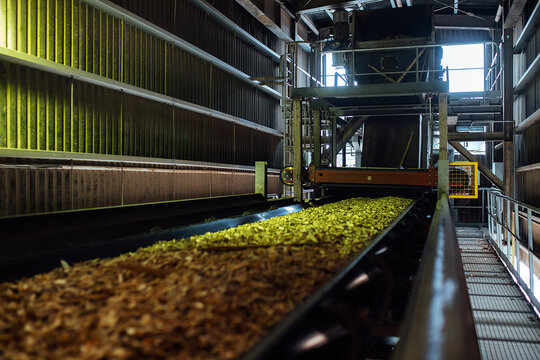 sawdust conveyor. the wood processing plant transports wood chips on a conveyor belt. utilization of production waste for biofuels