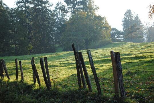 Pâturage jurassien sous la brume du printemps en matinée
