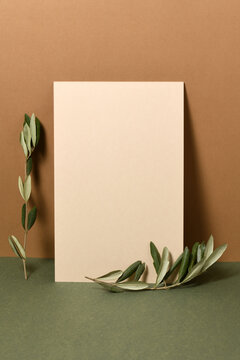 Blank paper with olive branches