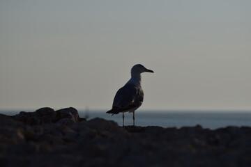 Fototapeta ptak
