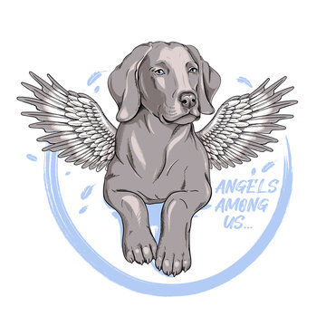Cute weimaraner dog with angel wings. Vector illustration in hand-drawn style. Angels among us illustration. Stylish image for printing on any surface
