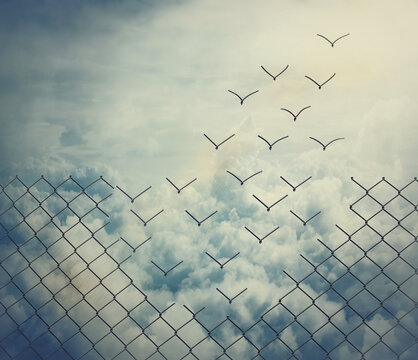 Surreal and magical escape as metallic wire mesh transforming into flying birds above the clouds. Overcoming obstacles together, teamwork concept. Freedom and success minimalist inspirational art.
