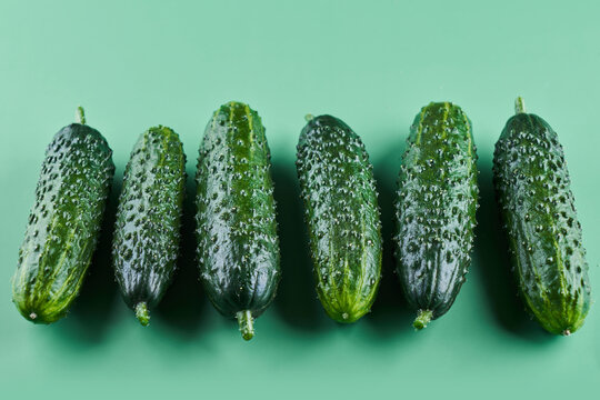 Set of fresh whole cucumbers isolated on a green background, clipping path. Garden cucumber wallpaper backdrop design