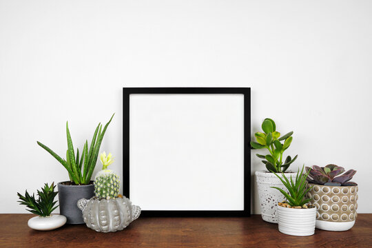 Mock up black square frame with a variety of houseplants. Wood shelf against a white wall. Copy space.
