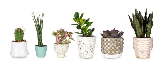 Fototapeta Group of various unique houseplants in pots isolated on a white background obraz