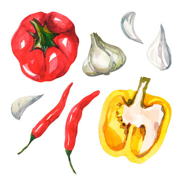 Watercolor set with vegetables on a white background. Seasonal vegetables isolated. Clipart with fresh vegetables. Healthy and wholesome food. Red bell pepper, garlic, hot chili, yellow bell pepper.