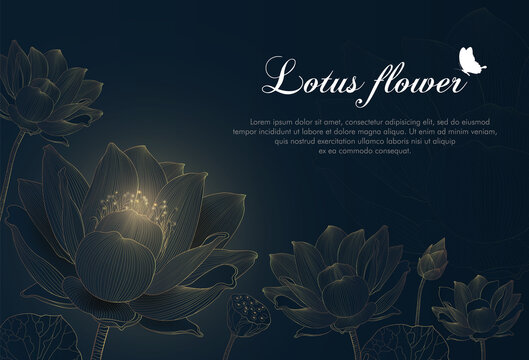 Luxury lotus background design with golden line and dark blue color. Lotus flowers line arts design for wallpaper, banner, prints, invitation and packaging design. Vector illustration