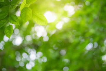 Amazing nature view of green leaf on blurred greenery background in garden and sunlight with copy...