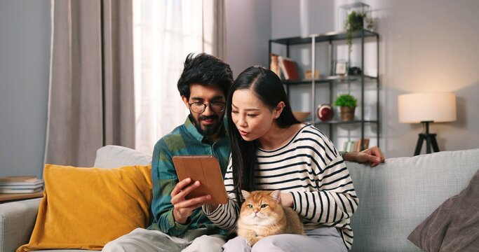 Portrait of joyful mixed-race young man and woman couple sitting on comfortable sofa in cozy room holding cat pet browsing on tablet choosing something online, leisure, social network concept