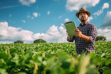 Fototapeta Latin American Farmer working on soybean plantation, examining crop development on tablet obraz