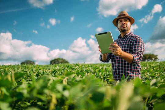 Latin American Farmer working on soybean plantation, examining crop development on tablet