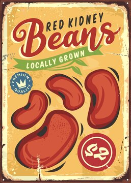 Locally grown red kidney beans vintage tin sign design. Agriculture and farming retro advertisement. Old poster for organic food product. Beans vector image.