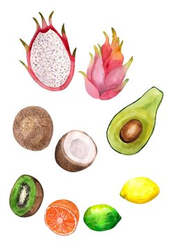 Watercolor illustration. Set of tropical bright fruits in a watercolor style. Avocado, coconut, kiwi, pitaya, lemon and lime