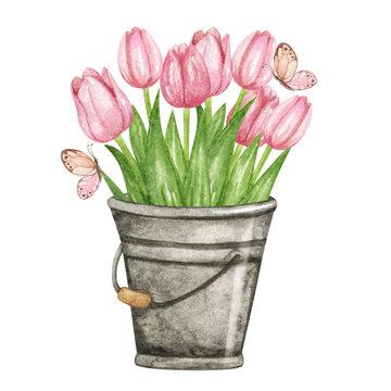 Watercolor tulips in a metal bucket, pink tulips, spring hand drawn illustration, watercolor garden decor