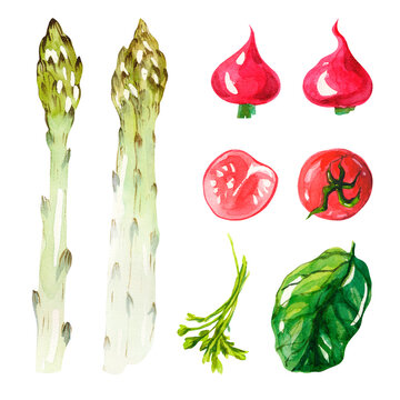 Watercolor set with vegetables on a white background. Green asparagus, tomatoes, radishes, parsley and spinach. Isolated vegetables. Healthy food. Vegetarian set.