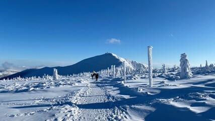 Fototapeta Śnieżka zimą