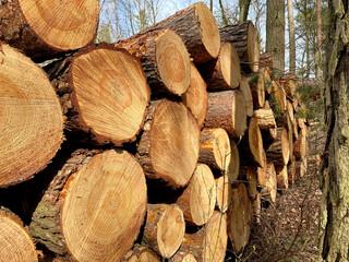 Fototapeta ścięto drewno w lesie  obraz