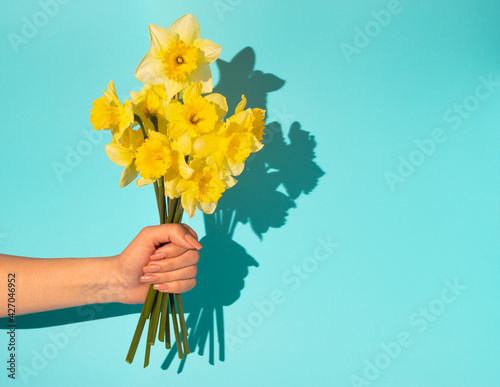Woman hand holding bouquet of blooming yellow narcissus flowers or daffodil on blue background. Minimal spring concept. Mother's day idea.