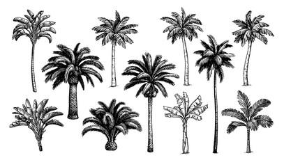 Palm trees big set. - fototapety na wymiar