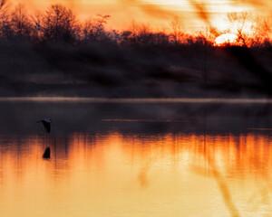 Fototapeta lecący ptak tuż nad wodą