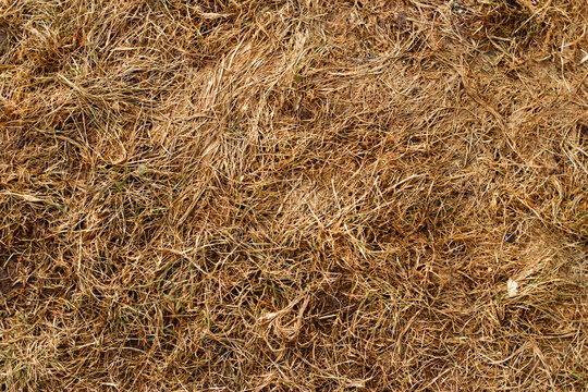 Last year's grass background image texture