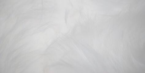 Fototapeta Textura de superfície fofa em pêlo macio branco