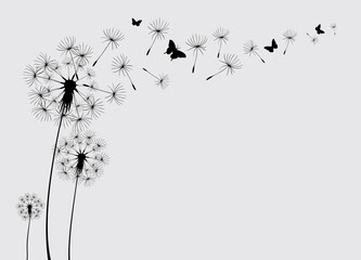 Obraz Dandelion with flying butterflies and seeds, vector illustration. Vector isolated decoration element from scattered silhouettes - fototapety do salonu