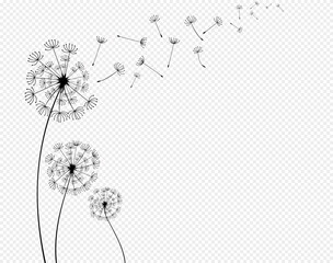 Obraz Abstract background of a dandelion for design. The wind blows the seeds of a dandelion.  Vector illustration - fototapety do salonu