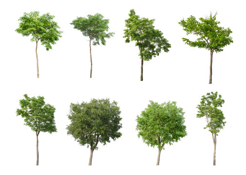 eight tree on a white background, a collection of trees,cutting paths.