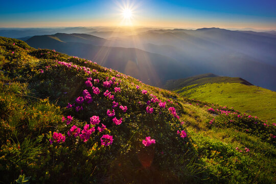 Late spring or early summer in the mountains, relaxing landscape with flowers and sunrise