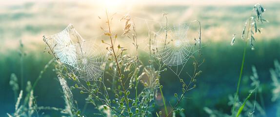 Fototapeta beautiful cobwebs in grass. morning nature landscape, shining sunlight. atmosphere nature image. summer season