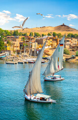 Fototapeta Birds over sailboats