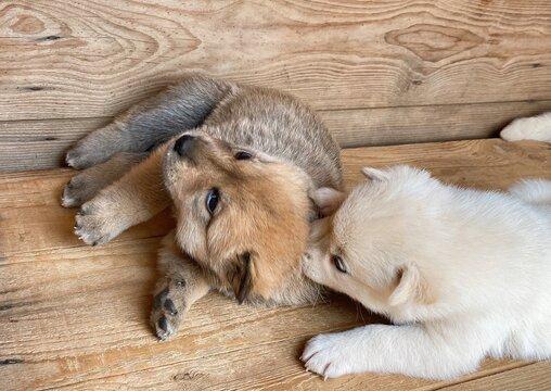 개구쟁이 아기 강아지