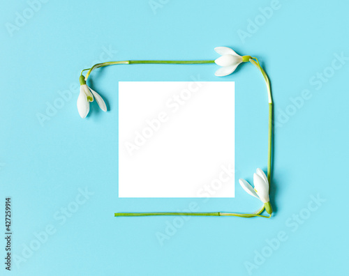 frame on postcard of snowdrops with white paper for Women's Day or Mother's Day. minimalism on a blue background